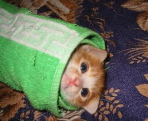 Первая помощь при ранах у кошек, котов и котят