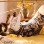 Ушибы у кошек, котов и котят — степени, первая помощь и лечение