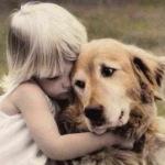 Отказ задних лап у собак — симптомы, причины и первая помощь