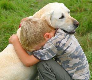Симптомы отказа задних лап у собак