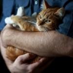 Инсульт у кошек — причины, симптомы, первая помощь, лечение