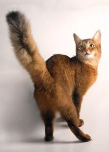 Что делать, если кот грызет хвост?