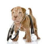 Заболевания кожи у собак: виды, симптомы и лечение