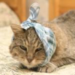 Заболевания зубов у кошек – причины, симптомы, лечение, профилактика