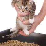 Как отучить кошку или кота от вредных привычек?
