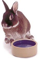 Почему кролик не ест?