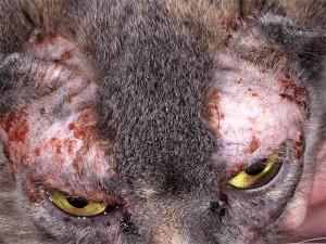 Аллергические реакцииу кошек и котов