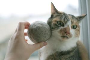 Причины выпадения шерсти у кошек и котов