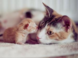 Кошка после родов: осложнения