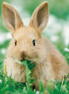 Почему кролик вялый?