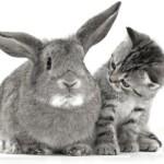 Почему кролик стал пассивным (вялым) — не ест, не пьет, не играет?
