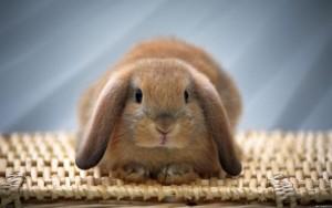 Кролику плохо - что делать?