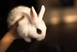 Диагностика поноса (диареи) у кроликов