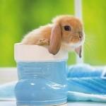 Понос (диарея) у кроликов
