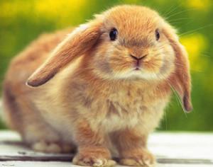 Причины поноса (диареи) у кроликов