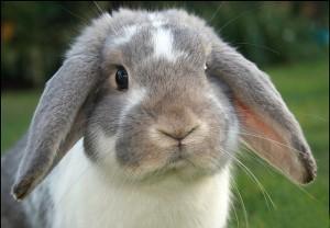 Функция слепой кишки в здоровом организме кролика