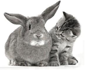 диарея у кроликов