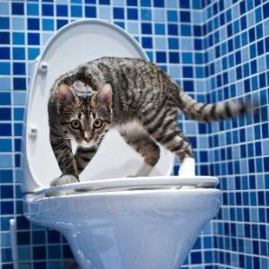 Хирургическое лечение запоров у кошек и котов