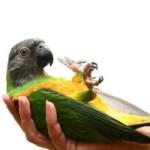 Заболевания попугаев, при которых необходима эвтаназия — признаки, лечение, случаи передачи человеку