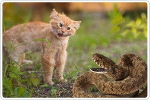 У кошки или кота опухла морда из-за укуса змеи