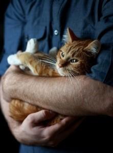 Судороги (эпилепсия) у кошек - причины, симптомы, первая помощь и лечение