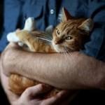 Судороги (эпилепсия) у кошек — причины, симптомы, первая помощь и лечение