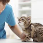 Отодекоз (ушная чесотка) у кошек и котов — возбудители, симптомы, диагностика, лечение, профилактика