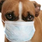 Анафилактический шок у собак — симптомы, первая помощь, профилактика
