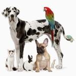 Гиперчувствительность у животных (аллергическая реакция, аномальная иммунная реакция)