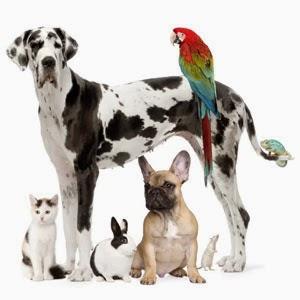 Гиперчувствительность у животных