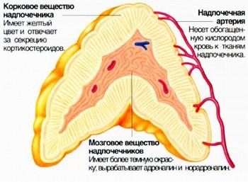гормоны при аллергии преднизолон