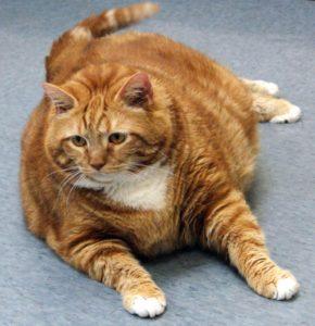 Что вызывает развитие диабета у кошек и котов?