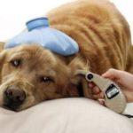 Тепловой удар у собак — признаки, причины, первая помощь, лечение, профилактика