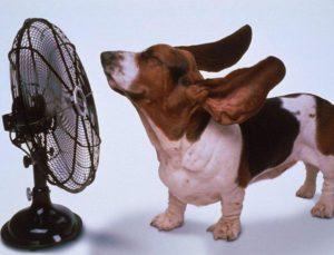Профилактика теплового удара у собак