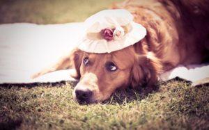 Избежание гипертермии у собак