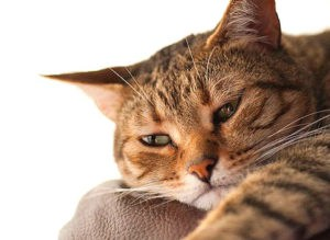 Кошка не ест из-за воспаление в желудке и кишечнике