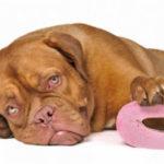 Понос (диарея) у собак — диагностика, причины, симптомы, лечение