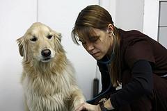 Как определить частоту дыхания у собак