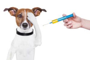Как правильно делать укол собаке