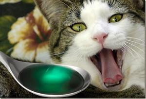 Как заставить кошку принять лекарство