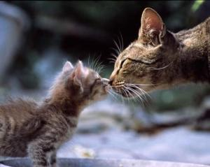 Что может понадобиться для родов у кошки