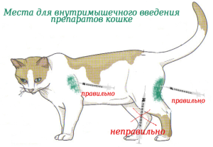 Как сделать укол кошке внутримышечно