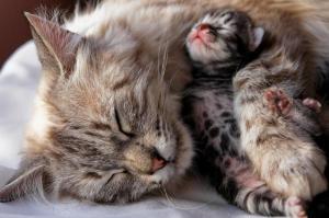 Какие осложнения бывают у кошек в процессе родов