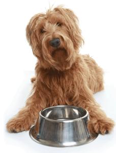 Кормление больной собаки