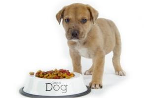 Рацион правильного питания собак