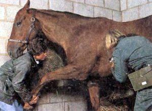 Стрижка лошадей в картинках