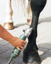 Технология стрижки лошадей