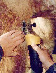 Как правильно стричь лошадь фото