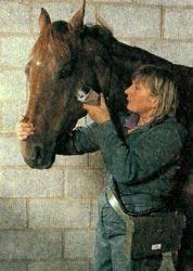 Правила стрижки лошадей