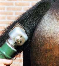Как постричь лошадь
